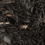 Black Cedar Mulch for Sale in NJ and Ny